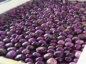 山形県産の赤かぶは表皮は鮮やかな赤紫色です