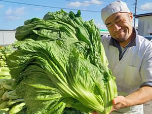 山形青菜の大きさ