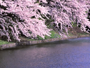 春(4月~6月)の米沢市